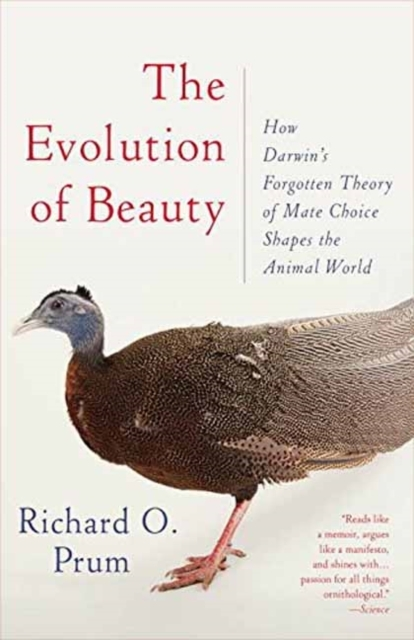Afbeelding van The Evolution of Beauty