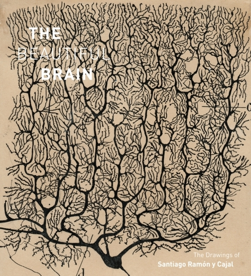 Afbeelding van Beautiful Brain: The Drawings of Ramon y Cajal