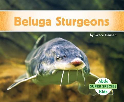 Afbeelding van Beluga Sturgeons