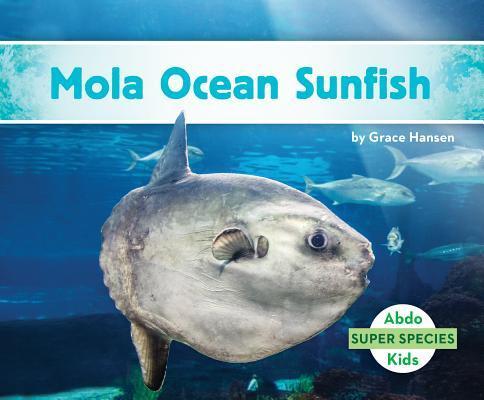 Afbeelding van Mola Ocean Sunfish