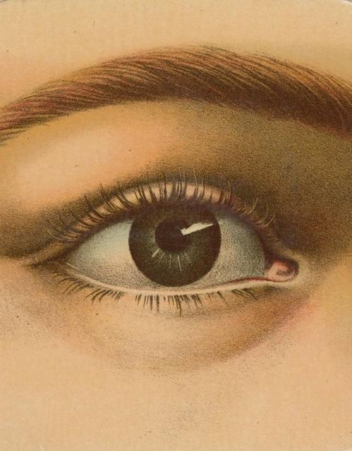 Afbeelding van John Derian Picture Book