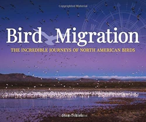 Afbeelding van Bird Migration