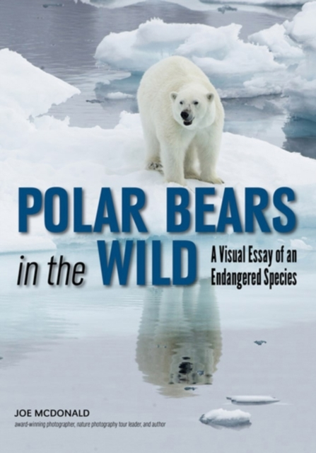 Afbeelding van Polar Bears in the Wild