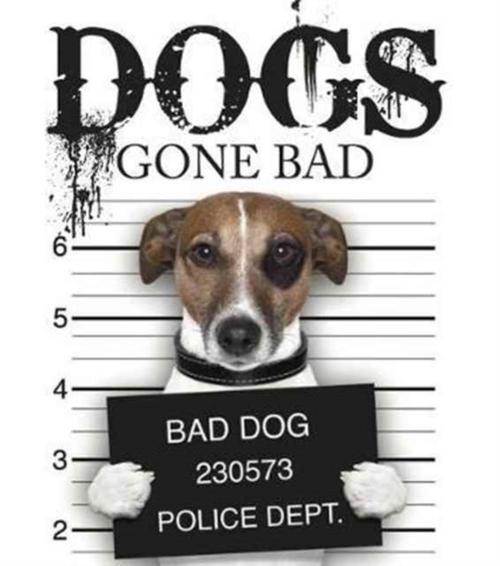 Afbeelding van Dogs Gone Bad