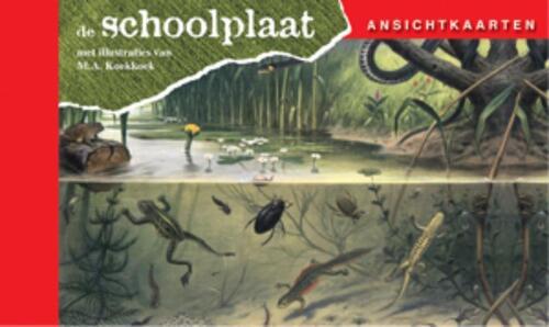 Ansichtkaarten, de Schoolplaat In Ons Land kopen