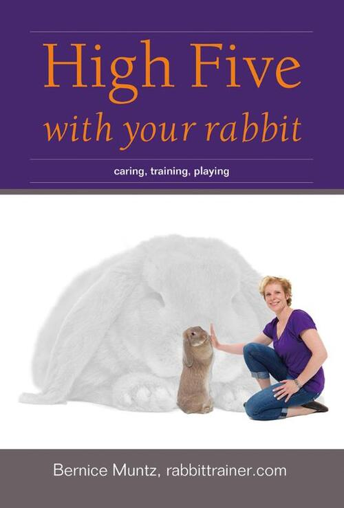 Afbeelding van High five with your rabbit