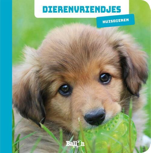 Afbeelding van Dierenvriendjes - Huisdieren